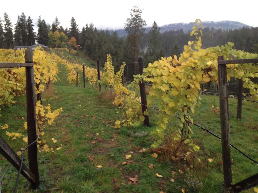 Vineyard is ready to rest after a productive year.