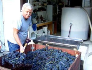 Grapes are crushed in late September and early October and guests are welcome to join in.